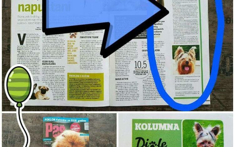 Photo of DJOLETOVE AVANTURE: Ko je novi kolumnista magazina PAS? 🤔