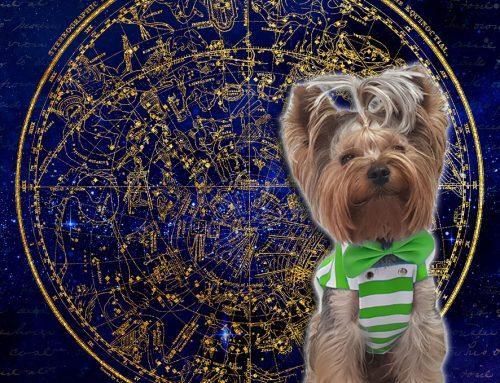 Veliki đoletovski horoskop: LJUBAV