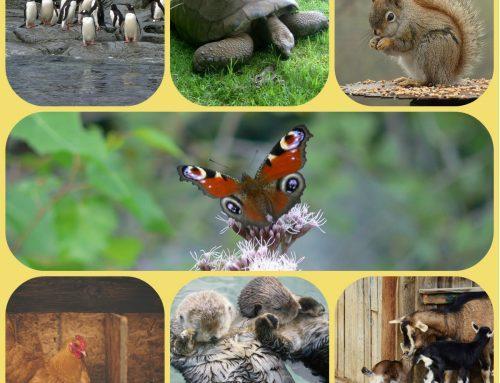 Zanimljive činjenice o nekim životinjama koje sigurno niste znali!