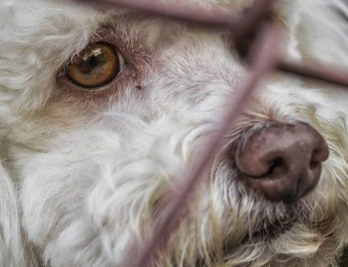 U ITALIJI I VELIKOJ BRITANIJI kazne za napuštanje životinje su ENORMNE! Baš kakve i treba da budu!