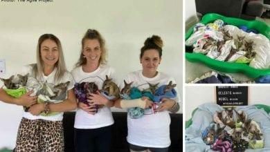 Photo of Kako su mladi ljudi spasili SEDAM BEBICA KENGURA koje su ostale bez mama u požarima u Australiji