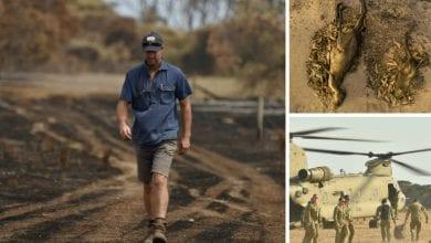 """Photo of Jedan australijski farmer je MORAO DA SAHRANI 400 OVACA nakon požara koji je """"progutao"""" njegovo imanje"""