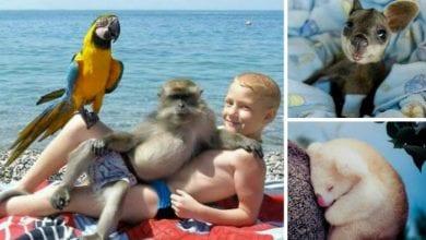 Photo of Fotografije životinja koje će vam ISCELITI DUŠU bolje od psihoterapije (II deo)