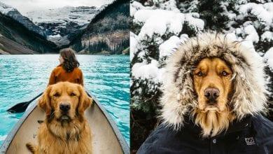 Photo of Upoznajte PSA ASPENA, koji je do sada putovao kroz 8 ZEMALJA i dokazao da su psi NAJBOLJI PRIJATELJI i za nezaboravne avanture!