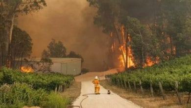 Photo of DIRLJIVO I POTRESNO: Vatrogasac i KOALA bespomoćno gledaju kako požar uništava njen dom