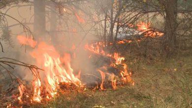Photo of Roštiljanje na FRUŠKOJ GORI izazvalo POŽAR NA 10 HEKTARA!