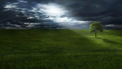 Photo of UPOZORAVAJU STRUČNJACI: Sadnja drveća NA POGREŠNOM MESTU mogla bi da POVEĆA EMISIJU GASOVA sa efektom staklene bašte