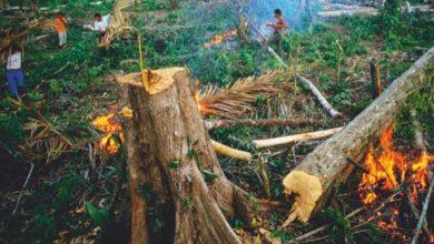 Photo of UNIŠTAVANJE PLANETE SE NASTAVLJA ISTOM ŽESTINOM: Alarmantni trendovi za životnu sredinu!
