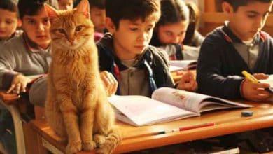 Photo of Mačak sa ulice je UŠAO U ŠKOLSKU UČIONICU i odlučio da POSTANE ĐAK (VIDEO)