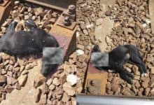 Photo of TUGA I BES DO NEBA: Obezglavljeni štenci pronađeni na železničkoj pruzi u Subotici (UZNEMIRUJUĆE FOTOGRAFIJE)