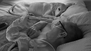 Photo of Veza veteran i njegovog psa je bila toliko jaka da ih NI SMRT NIJE RAZDVOJILA
