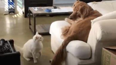 Photo of ČEK, BEŠE LI MJAU ILI AW: Upoznajte mačka koji MISLI DA JE PAS, jer je odrastao u porodici sa psima (VIDEO)