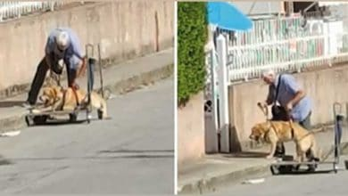 Photo of LJUBAV ZA DIVLJENJE: Čovek SVAKOG DANA izvodi u šetnju svog bolesnog i nepokretnog psa