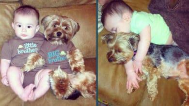 Photo of MLAĐI I STARIJI BRAT: Ova beba i njegov pas su nešto najlepše što ćete danas videti! (VIDEO)
