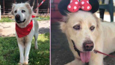 Photo of PRIČA O KRASIVI KOJA TRAŽI DOM: Kako je pas iz azila spasio život drugom psu