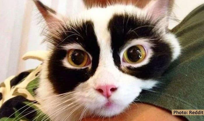 Photo of Jedni je zovu PANDA-MACA, drugi RAKUN-MACA, ali je u svakom slučaju – JEDINSTVENA I PRESLATKA!
