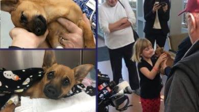 """Photo of SPASENO siroto štene pronađeno u autu PREDOZIRANO HEROINOM, a """"vlasnici"""" su u zatvoru – gde im je i mesto"""