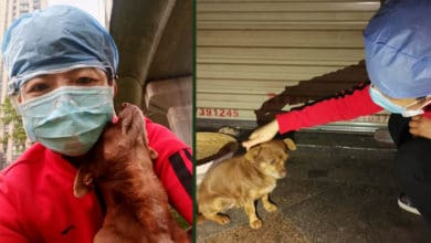 Photo of PSIĆ SA ULICE pomogao jednoj medicinskoj sestri da prevaziđe stres sa posla u borbi sa koronom, a ona mu se zahvalila na NAJLEPŠI NAČIN!