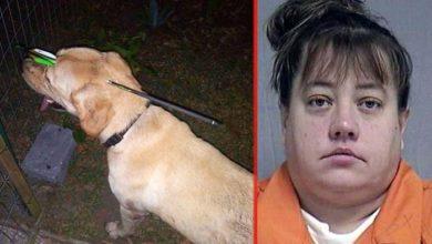 """Photo of ČUDO DA JE PREŽIVEO: Žena pucala SAMOSTRELOM PSU U GLAVU, jer je """"piškio na njenu automobilsku gumu"""" (VIDEO)"""