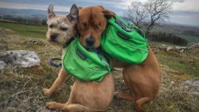 Photo of Ovaj pas je SLEP OD ROĐENJA, ali pronašao je VODIČA I NAJBOLJEG PRIJATELJA
