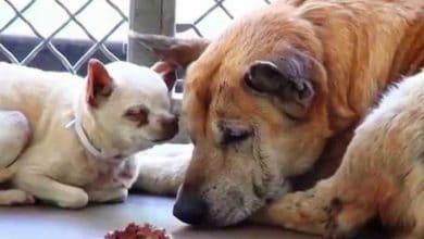 Photo of Stariji psi su OSTAVLJENI zajedno u prihvatilištu, jer su POSTALI PRESTARI za vlasnika… (VIDEO)