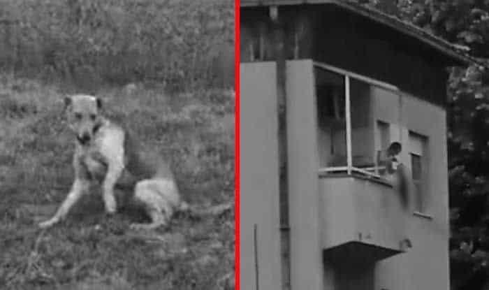 Photo of ŠTA ZNAMO NOVO o brutalnom zlostavljanju psa u Nišu i zlostavljanju i ubistvu mačke u Čačku (VIDEO)