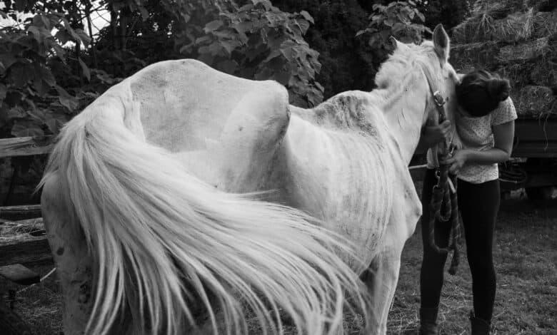 Photo of PRETUŽNE VESTI: Kobila ISLA koja je bila povređena sekirom, umrla je tokom noći…