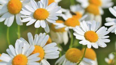 Photo of Biljke imaju svoj unutrašnji – BIOLOŠKI SAT