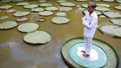 Photo of SLIKA DANA: Muškarac pozira na velikom listu lotusa u Vijetnamu