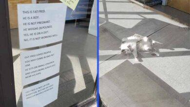 Photo of KORPULENTNA MAČKA je postala HIT nakon što su na vratima klinike ispisane poruke o njenoj prekomernoj težini