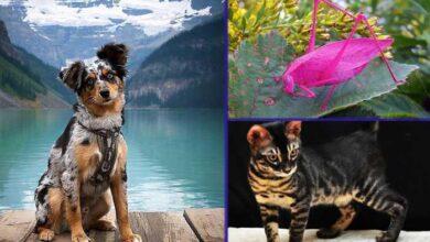 Photo of Genetske mutacije su ove životinje UČINILE ČAROBNIM I JEDINSTVENIM