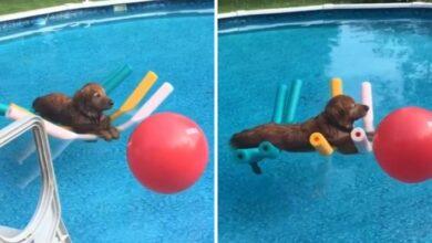 Photo of GENIJALNO: Ovaj pas KOJI PLUTA U BAZENU je opušteniji više nego što ćemo mi ikada biti! (VIDEO)
