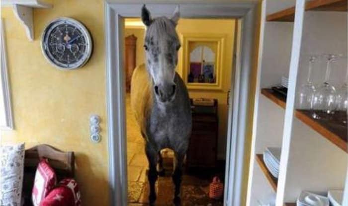 Photo of Konj je OPUŠTENO UŠAO u dnevnu sobu jedne porodice i POJEO POLA NJIHOVE VEČERE