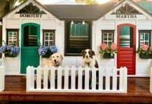 Photo of KAO IZ BAJKE: Od kućica za decu napravila je – kućice za kućne ljubimce