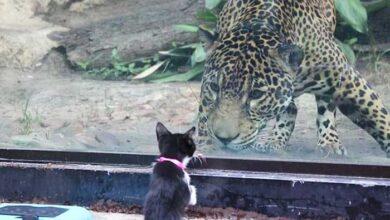 Photo of Kako izgleda kada KUĆNI LJUBIMCI posete zoo vrt i upoznaju svoje rođake!
