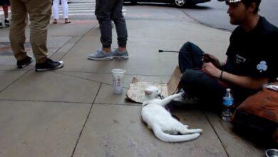 Photo of PRAVO PRIJATELJSTVO: Ljubav između beskućnika i njegove mace (VIDEO)