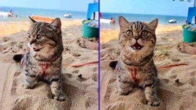 Photo of Ova maca je PRVI PUT NA PLAŽI i toliko je SREĆNA da ne može da sakrije oduševljenje