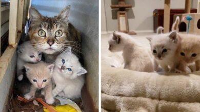 Photo of Mačka je ŠTITILA SVOJE MAČIĆE TELOM u dvorištu napuštene kuće, dok spasioci nisu došli da ih spasu
