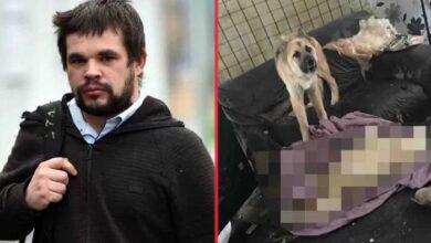 Photo of STRAVIČNO: Namerno pustio dva psa da GLADUJU DO SMRTI, u kući užasa