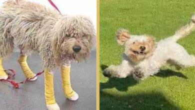 Photo of Ovo je pas sa TUŽNOM PROSLOŠĆU koji je dobio DRUGU ŠANSU