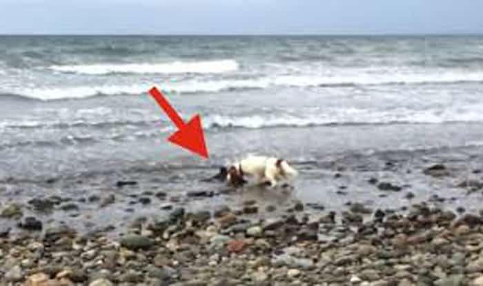 Photo of Čovek je čuo PANIČNI LAVEŽ SVOG PSA i pronašao NASUKANU BEBU DELFINA (VIDEO)