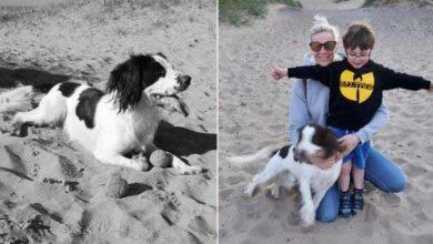 Photo of Porodični pas UGINUO nakon što je pojeo OSTATKE HRANE ostavljene na plaži u Lankaširu