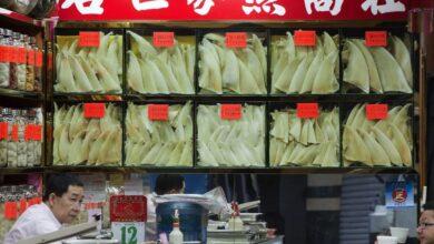 Photo of JEZIVO: Peraja ajkule se I DALJE PRODAJU u Hong Kongu kao SIMBOL BOGATSTVA