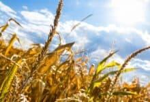 Photo of Da su poljoprivrednici POŠTOVALI POLICIJSKI ČAS, Srbija bi BILA GLADNA (VIDEO)