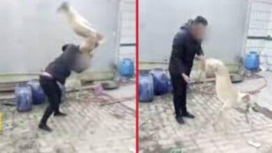 Photo of UZNEMIRUJUĆE: Ovaj monstrum je DIVLJAČKI PRETUKAO I UBIO svog hrta jer je IZGUBIO TRKU! (VIDEO)
