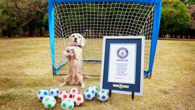 Photo of GINISOVI REKORDERI: Pas koji je najveći broj lopti uhvatio šapama za 1 minut i najbrži pas na lopti na svetu