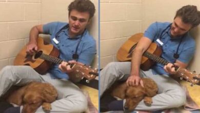 Photo of ON DEFINITIVNO VOLI ŽIVOTINJE: Veterinar svira gitaru svojim pacijentima (VIDEO)