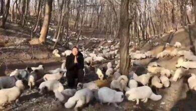 Photo of 174 LISICE OSLOBOĐENE iz sićušnih kaveza sa farme za proizvodnju krzna, PRVI PUT osetile zemlju pod nogama (VIDEO)