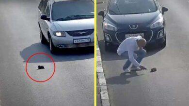 Photo of Kamera je snimila čoveka kako ZAUSTAVLJA AUTOMOBIL na prometnom putu, kako bi SPASIO ŽIVOT bespomoćnom mačetu (VIDEO)