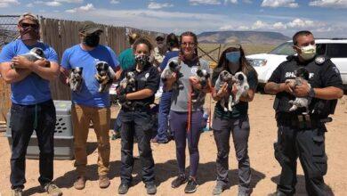 Photo of Preko 100 pasa SPASENO iz STRAVIČNIH USLOVA u Koloradu!